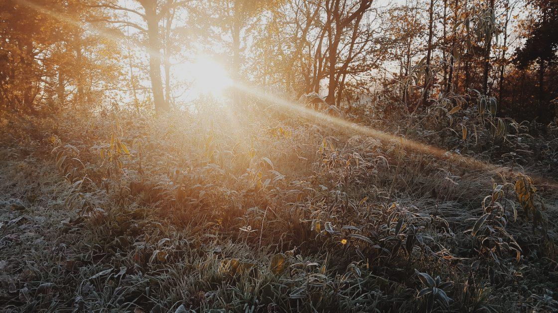 nature avec soleil